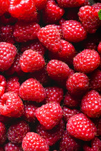 Farm Fresh Raspberries  - Fresh Picked.