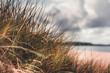 canvas print picture - Gras am Strand der Ostsee