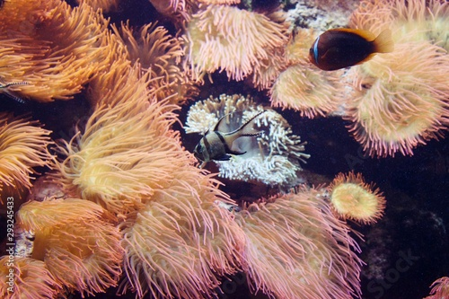 Saltwater fish tank with coral reefs and clown fish and Cardinal Fish