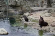 Three Seals In Zoo Enclosure