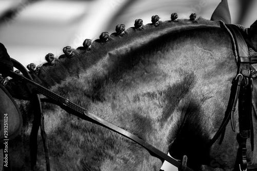 tressage de crinière de cheval Fototapete