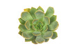 succulent or cactus isolate on white background