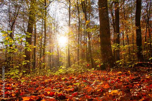 Foto auf AluDibond London Laubwald in der Sonne