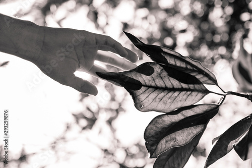 hand touching a leaf