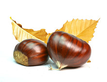Chestnut Or Chusnut With Dry Leaves Isolated