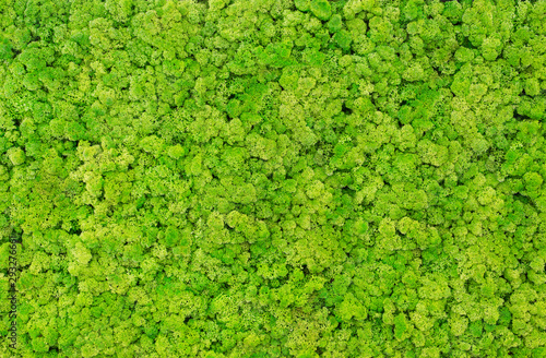 Fototapeta Texture of green moss on the wall in the form of a picture. Beautiful white frame for a picture. obraz