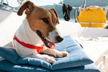 Portrait Of A Dog Jack Russel Terrier Lying On A Decorative Pillow On Board A Sailing Yacht In The Light Of The Sun's Rays In The Afternoon In Summer Against The Backdrop Of Mountains And The Sea