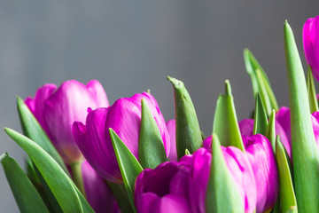 Bouquet of beautiful purple tulips close up. Flower background