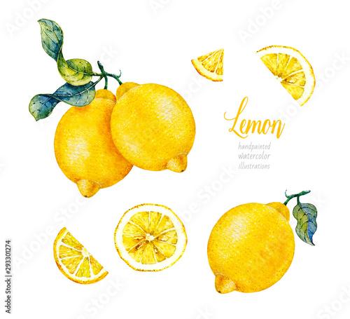 Fototapeta Botanical lemon. Watercolor. Citrus fruit