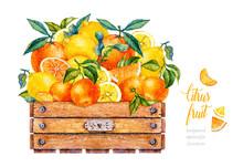 Watercolor Orange, Lemon, Mandarin. Watercolor Botanical Illustration. Citrus Fruit. Wooden Box With Fruit