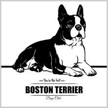 Boston Terrier Dog - Vector Illustration For T-shirt, Logo And Template Badges
