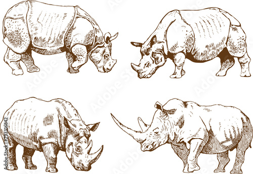 Fotografija vector image of a wild rhino set in outline art style