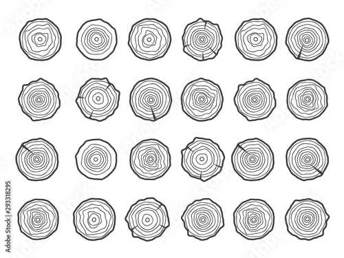 Fotografia Annual tree growth rings logo. Abstract circle tree background
