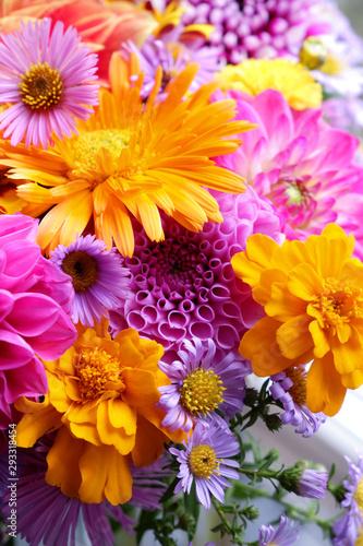 Fototapety, obrazy: Bunch of fresh autumn flowers. Colorful zinnias, asters, dahlias.