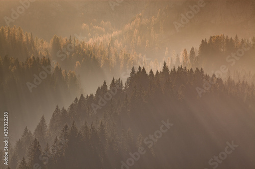 Matin avec brouillard sun-rays through misty pine forest