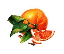 Watercolor Mandarin. Watercolor Botanical Illustration. Citrus Fruit. Mandarin Set. Slices Of Tangerine