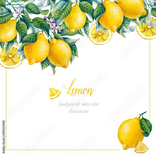 Obraz na plátně Botanical lemon. Watercolor. Citrus fruit