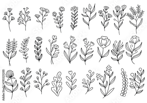 Türaufkleber Künstlich collection forest fern eucalyptus art foliage natural leaves herbs in line style. Decorative beauty elegant illustration for design hand drawn flower