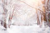 Fototapeta Fototapety na ścianę - Winter landscape. Forest under the snow. Winter in the park.