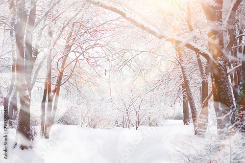 Fotomural  Winter landscape. Forest under the snow. Winter in the park.