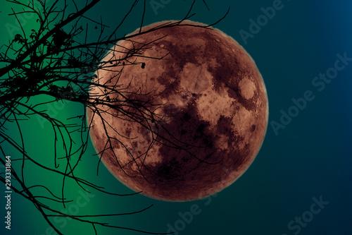 super dark harvest moon on night sky back dry branch tree Canvas Print