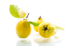 Ripe Natural Organic Quince Is...