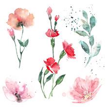 Light Watercolor Illustrations...