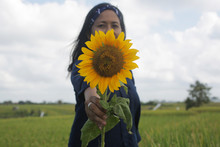 Woman Holding Sunflower In Fie...