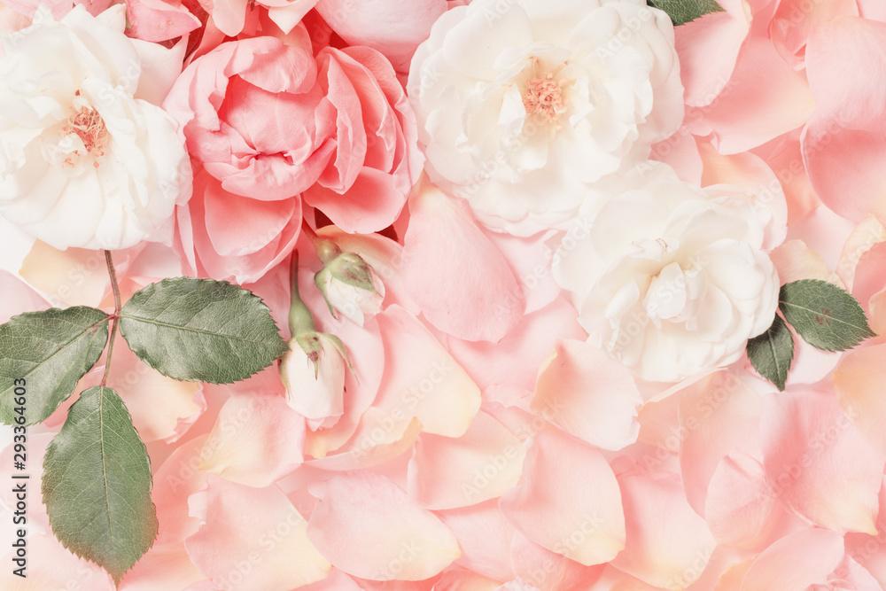 Fototapeta rose flowers and petals background