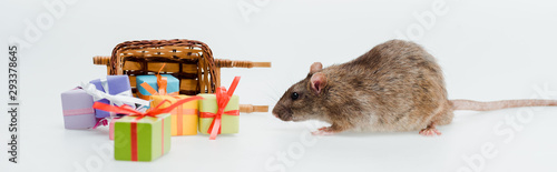 plakat panoramic shot of little rat near toy sleigh and presents isolated on white