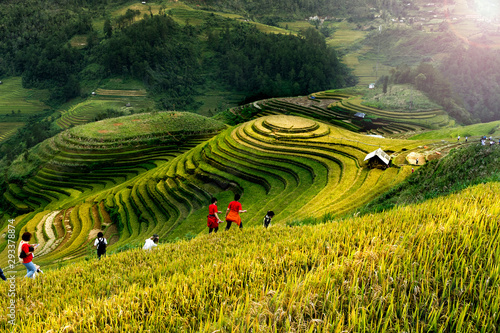 Foto auf Gartenposter Bali Rice fields on terraced of Mu Cang Chai, YenBai, Vietnam. Vietnam landscapes.
