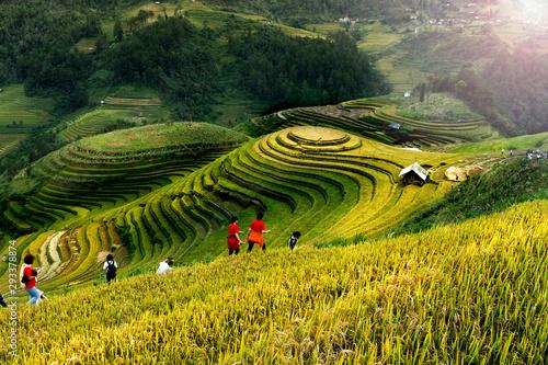 Papiers peints Culture Rice fields on terraced of Mu Cang Chai, YenBai, Vietnam. Vietnam landscapes.