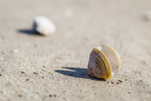 Scores Of Shells Ejected On Th...