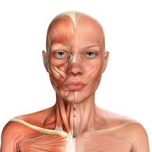 3d Illustration Of Female Face...