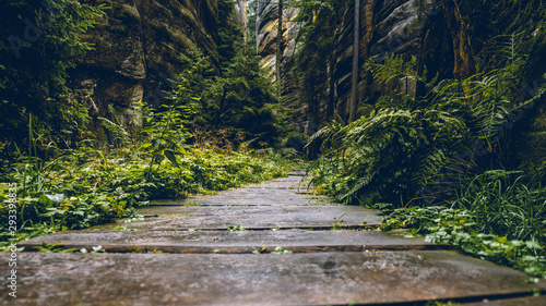 fototapeta na drzwi i meble Wooden path in a dark forest after rain