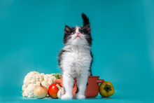 Cooking Black And White Fluffy Kitten Next To An Orange Bowl And Vegetables
