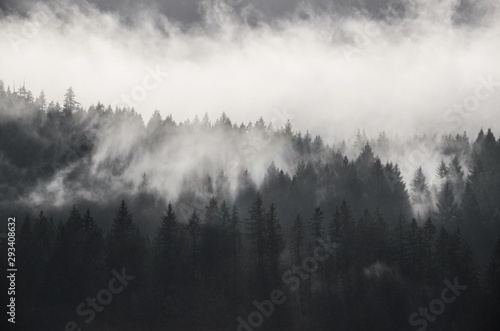 Obraz Beautiful shot of forested mountains in fog under a cloudy sky in black and white - fototapety do salonu