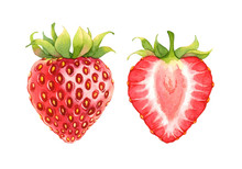 Isolated Watercolor Strawberry