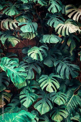 wzor-tropikalnych-lisci