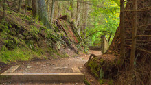 Forest Section Of Loop Trail A...