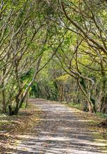 Autumn Path Through The Woods