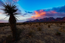 Organ Mountains And Yucca