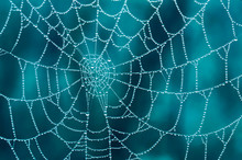 Spider Web With Dew Drops In Closeup With A Blue Background