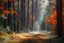 Autumn Forest. Fall Nature Lan...