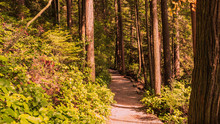 Sasamat Loop Trail In Forest N...