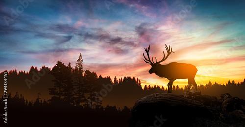 Cuadros en Lienzo  deer at sunset