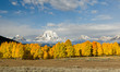 canvas print picture Snow capped Mount Moran in autumn