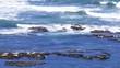 Moss Beach California USA Seals sunbathing on rocks, surf, static tripod