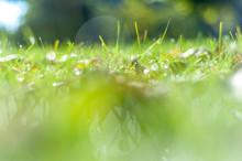 Closeup View Of A Dewy Grass O...