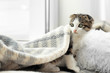 canvas print picture Adorable little kitten under plaid on bed indoors